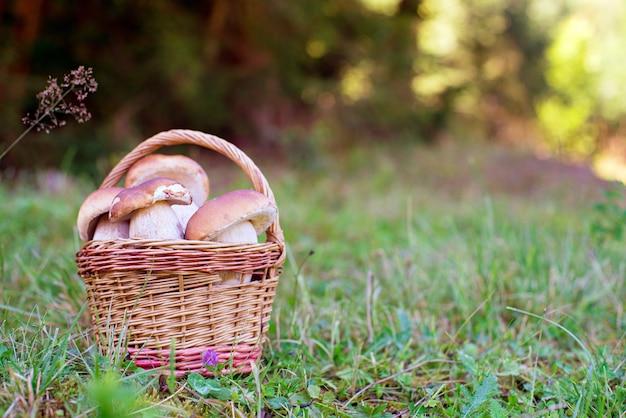 Una merce nel carrello dei funghi o il prato