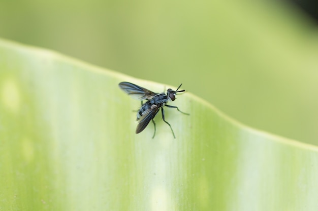 Una mosca su una foglia verde