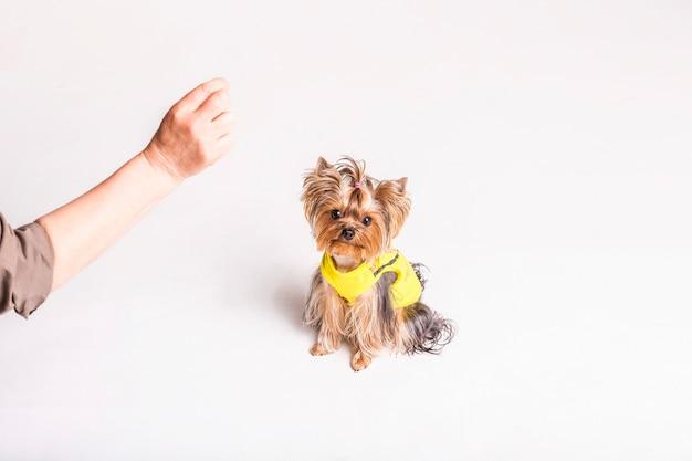 Una persona che gioca con il cane adorabile su fondo bianco