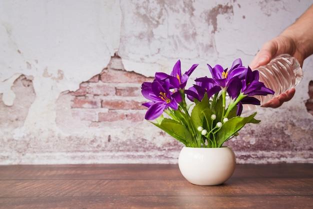 Una persona che innaffia i fiori nel vaso sulla tavola di legno contro la parete nociva