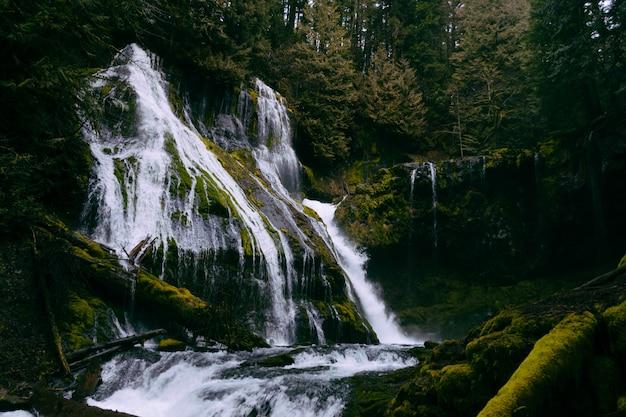 Una piccola bella cascata in una foresta che forma un fiume