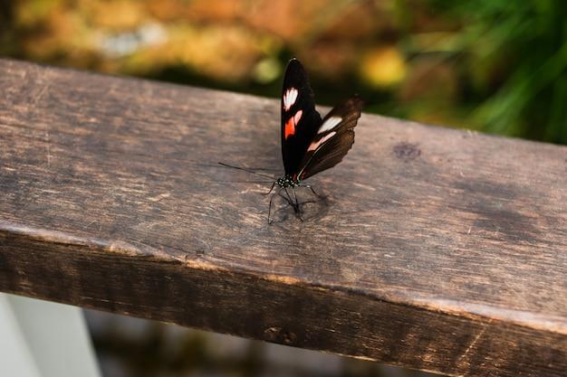 Una piccola farfalla su ringhiere in legno