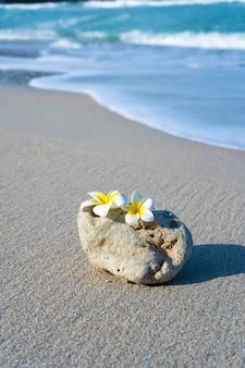 Una piccola pietra di una forma liscia interessante è lavata dalle onde sulla spiaggia. calma e relax con il concetto di mare