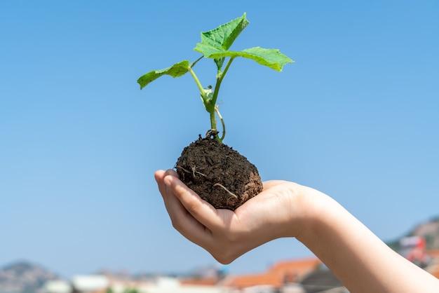 Una ragazza con una pianta verde in mano