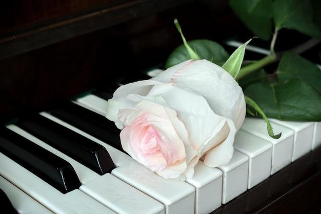Una rosa rosa pallida giace sulla vecchia tastiera di un pianoforte.