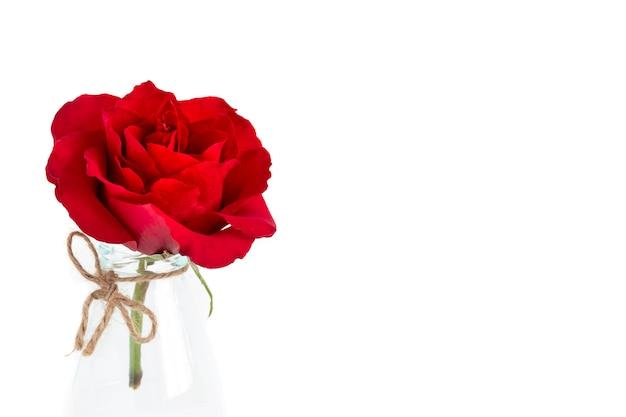 Una singola rosa rossa fiorita