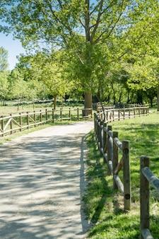 Una strada attraverso una piccola foresta verde solitaria