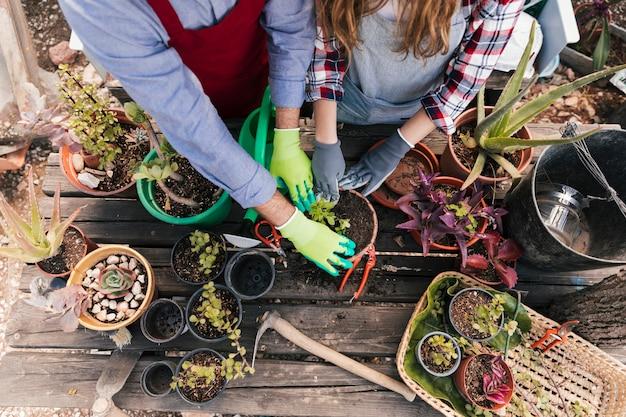 Una vista aerea del maschio e del giardiniere femminile che pianta le piante nel vaso sulla tavola di legno
