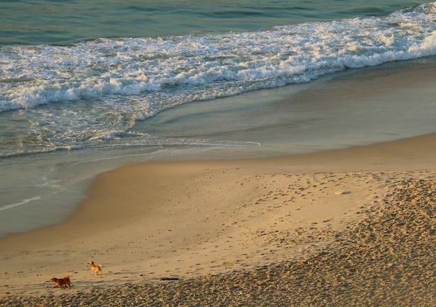 Una vista aerea di due cani che giocano sulla spiaggia di copacabana nel sole di mattina, rio de janeiro, brasile