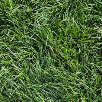 Una vista aerea di erba verde
