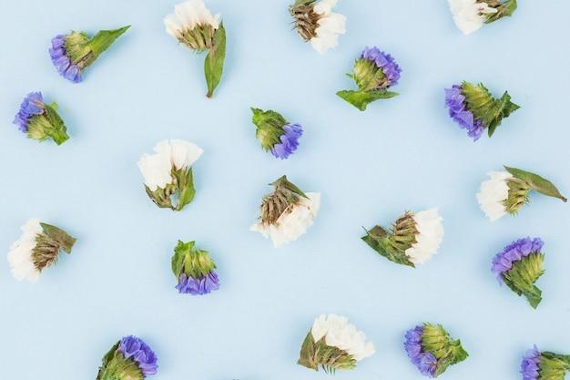Una vista aerea di fiori viola e bianchi su sfondo blu