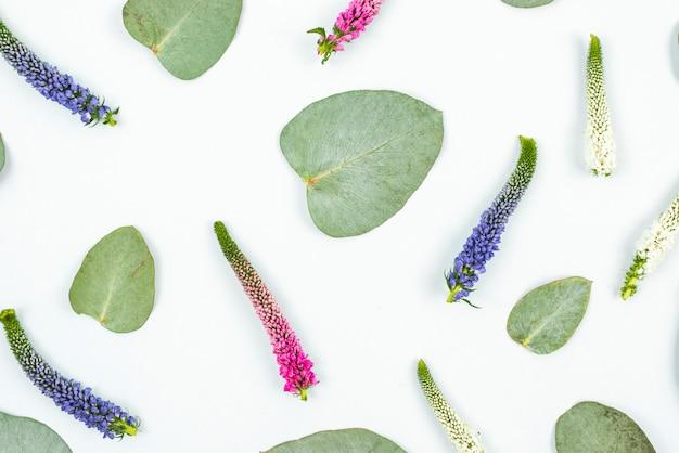 Una vista ambientale del fiore e dei fogli della veronica su priorità bassa bianca