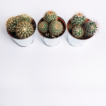 Una vista ambientale della pianta del cactus di alluminio contro priorità bassa bianca