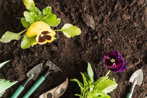 Una vista dall'alto della viola del pensiero pianta con attrezzi da giardinaggio sul suolo