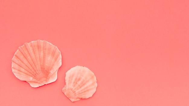 Una vista elevata della conchiglia di pettine su sfondo corallo