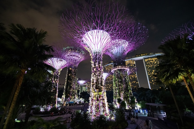 Una vista notturna del supertrees grove, cloud forest flower dome a gardens by the bay