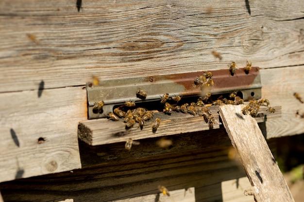 Una vista ravvicinata delle api che lavorano portando polline di fiori all'alveare sulle sue zampe. il miele è un prodotto dell'apicoltura. il miele d'api viene raccolto in bellissimi favi gialli.