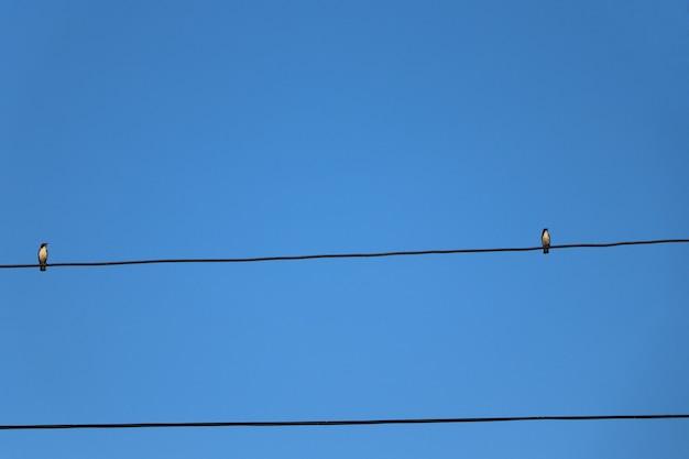Uno spazio di due uccelli che tengono sul filo con il fondo del cielo blu