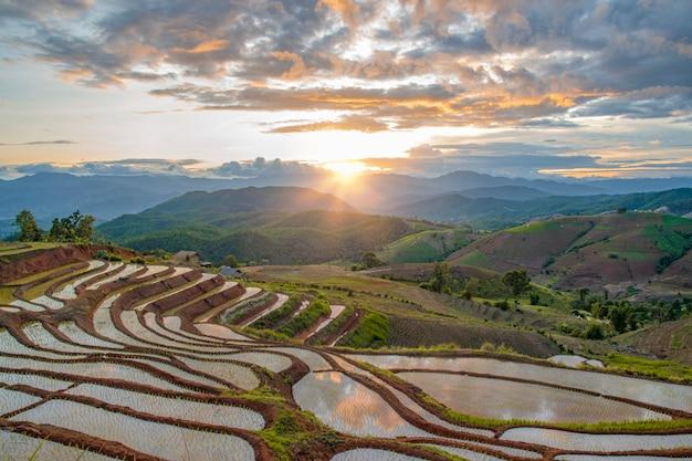 Uno splendido scenario di pa pong peang terrazza di riso nel tramonto a pa bong piang, terrazza di riso in famiglia a nord chiangmai thailandia.
