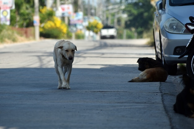 Uno stormo di cani randagi. cani da strada pericolosi.