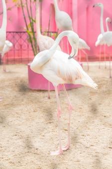 Uno stormo di fenicotteri rosa