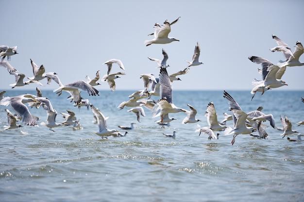 Uno stormo di gabbiani che volano