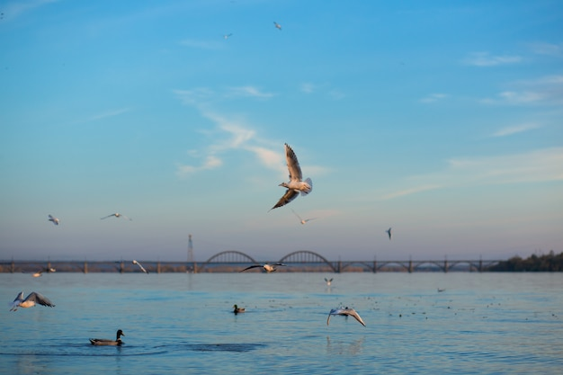 Uno stormo di gabbiani sulle rive del fiume della città