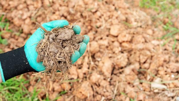 Uomini in possesso di un fertilizzante organico per una pianta