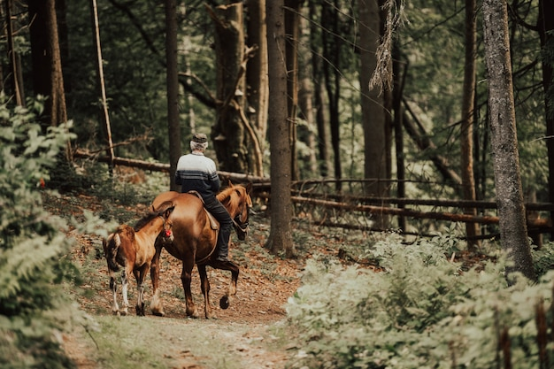 Uomo a cavallo giù rospo nella foresta