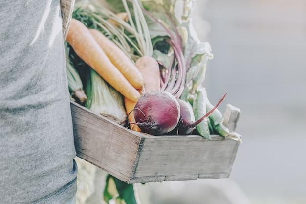 Uomo adulto del coltivatore che tiene le verdure saporite fresche in scatola di legno nel primo mattino del giardino