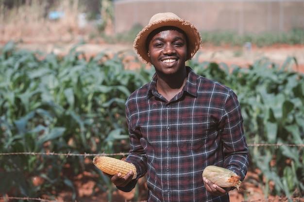 Uomo africano del coltivatore che tiene un cereale fresco vicino in una terra dell'azienda agricola.
