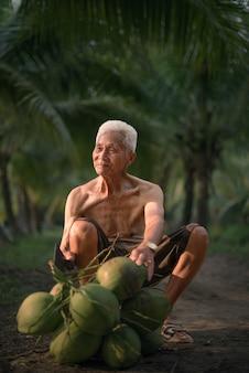 Uomo anziano che raccoglie noce di cocco nell'azienda agricola della noce di cocco