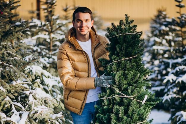Uomo bello che sceglie un albero di natale in una serra