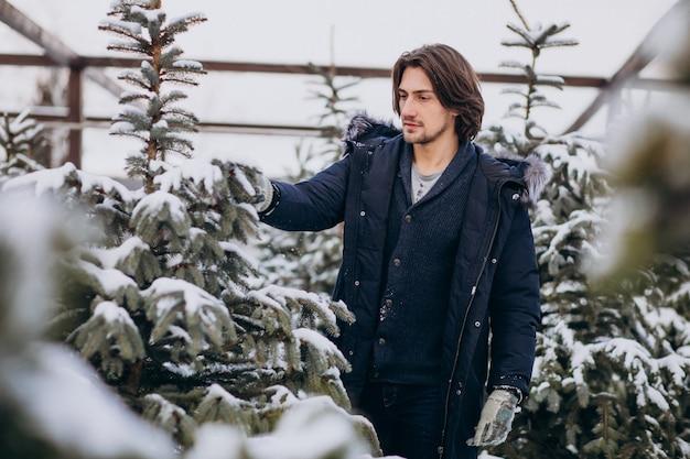 Uomo bello che sceglie un albero di natale