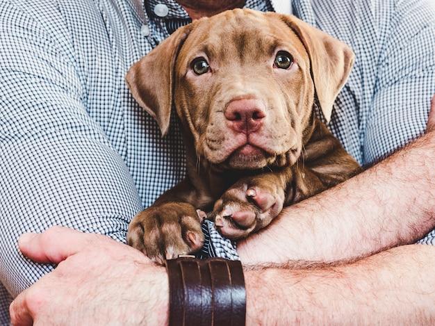 Uomo che abbraccia un cucciolo affascinante