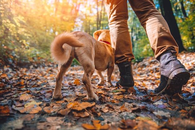 Uomo che fa un'escursione nella foresta di autunno con il cane