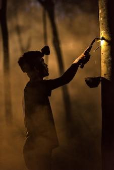 Uomo che spazza l'albero di gomma alla notte
