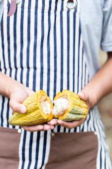 Uomo che tira fuori i fagioli dal baccello di cacao aperto