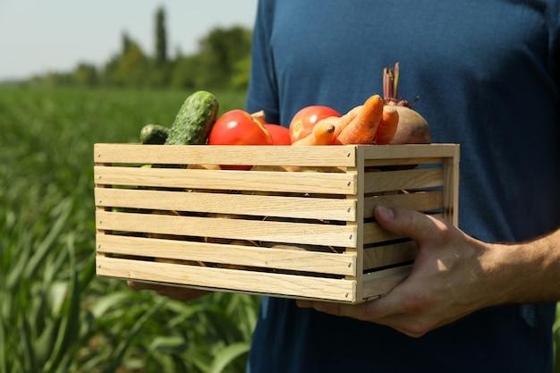 Uomo con la scatola di legno di verdure nel campo di grano.