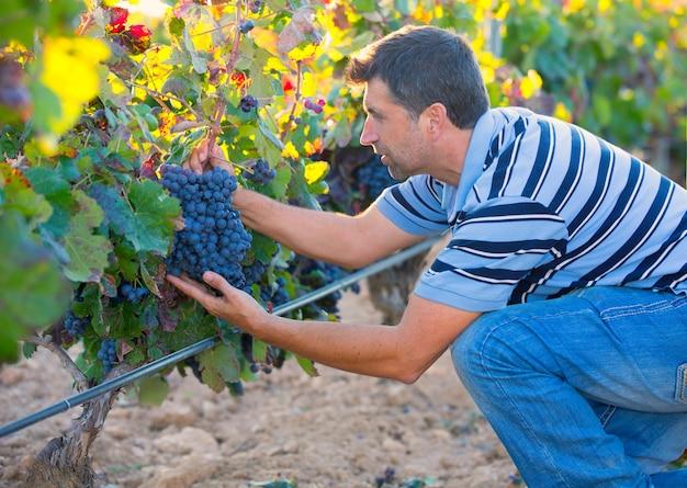 Uomo dell'agricoltore nelle foglie di autunno del raccolto della vigna nel mediterraneo