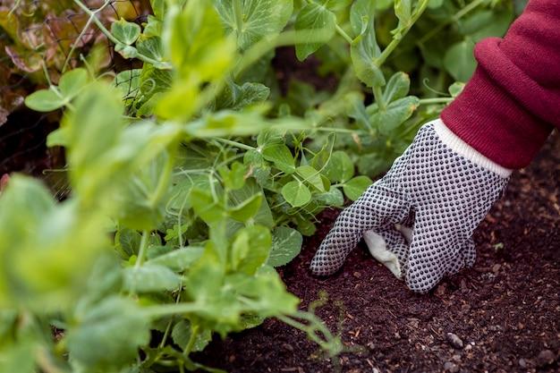 Uomo dell'angolo alto con i guanti di giardinaggio