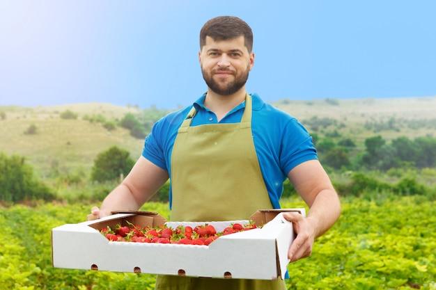 Uomo di mezza età barbuto in piedi in un campo di fragole con una scatola di fragole fresche