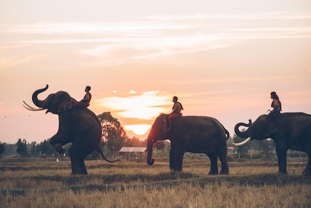 Uomo ed il suo elefante in tailandia del nord