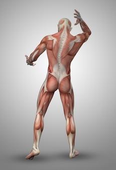 Uomo muscolare indietro