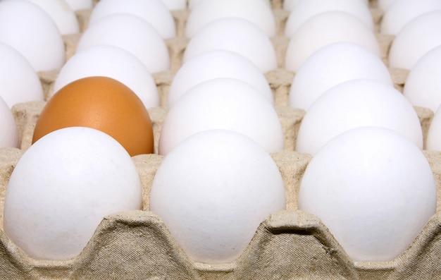Uova bianche e marroni