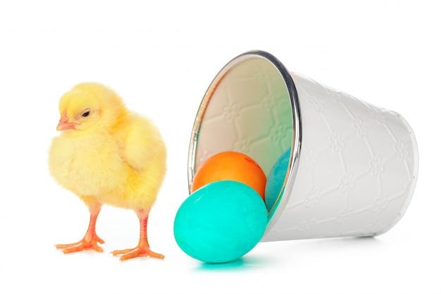 Uova colorate di pasqua e piccolo pollo sveglio isolato su bianco