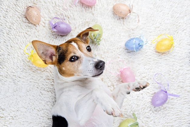 Uova di pasqua con divertente cucciolo in tappeto bianco