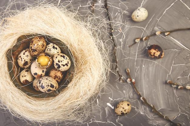 Uova di pasqua della quaglia nel nido su fondo grigio con il ramo del salice.