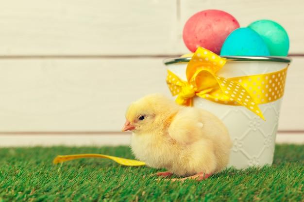 Uova di pasqua e polli su erba verde