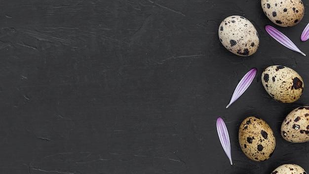 Uova di quaglia fresche vista dall'alto con spazio di copia